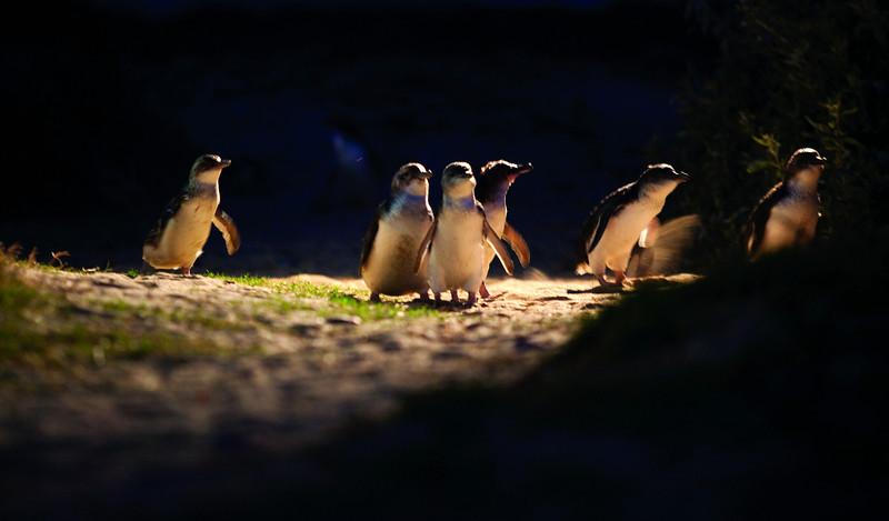 Penguins Tour 384, 324