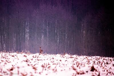 1301_WintersKravaal_035