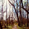 January sunshine in Stephen Austin State Park