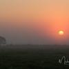 Foggy Sunrise over Katy Prairie, Texas
