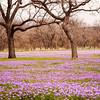 Spring in Llano
