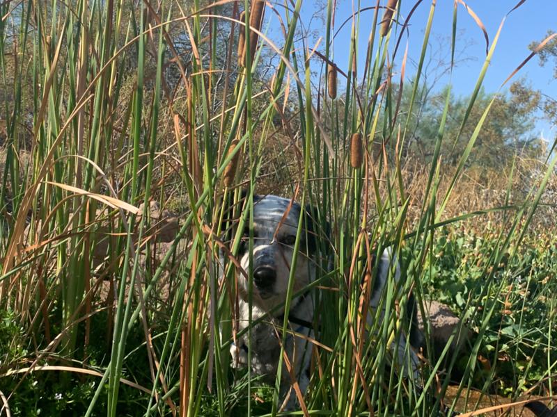 Where's Gus?