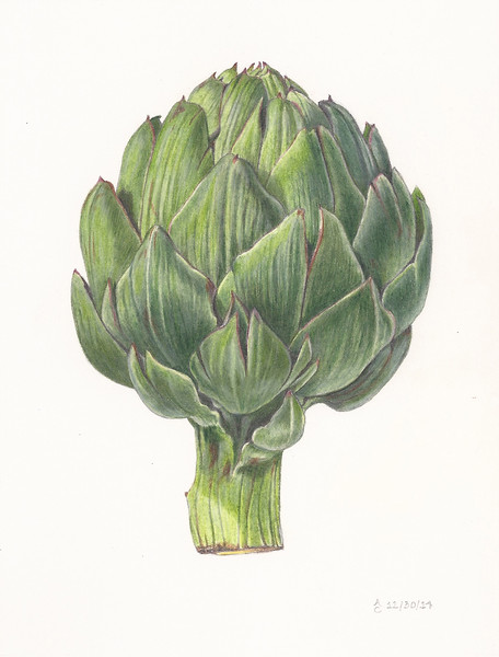Artichoke<br>© Anne Clippinger