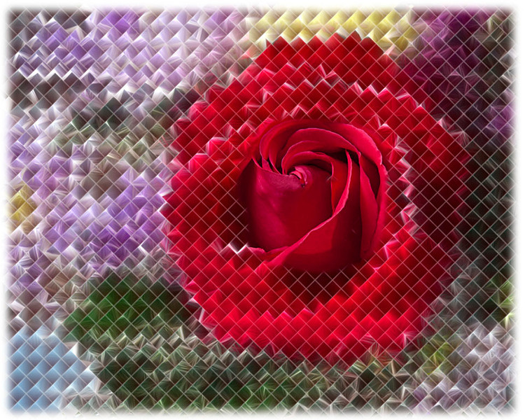2016 red rose fractalis w border