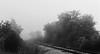 Foggy Tracks (3)