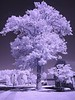 Brian and Lea Infrared Tree (7)