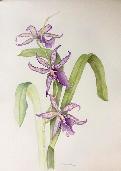 Oncidium orchids<br>© Ellen Keane
