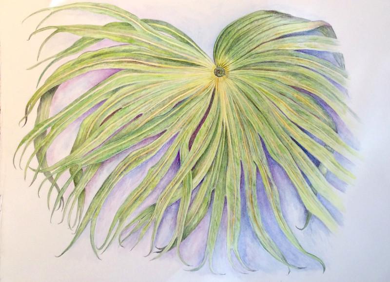 Palm (<i>Arecaceae</i>)<br>© Ellen Keane