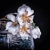 marygeorgeson_wildflower