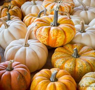 20180805-pumpkins