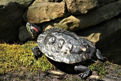 Turtle BOT 2