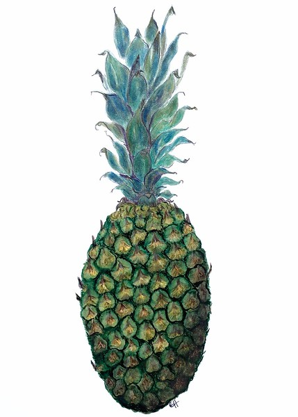 Pineapple (<i>Ananas comosus</i>)<br>© Gail Goodrich Harwood