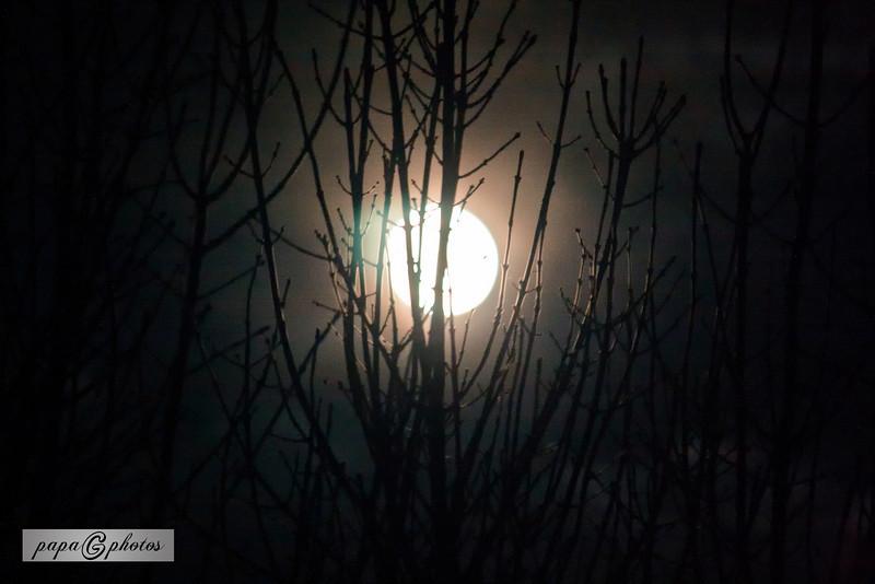 20101122 Moon Rise thru the Trees