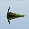 bird reflection-13