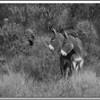 nbw-wild burros-dloseke