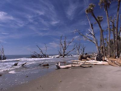 Irene Dowdy - Boneyard Beach