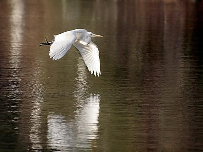 Jerry Koons - Egret