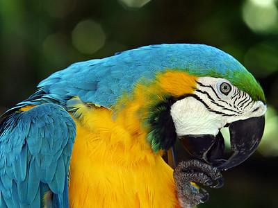 Jerry Koons - Jungle Gardens, Sarasota