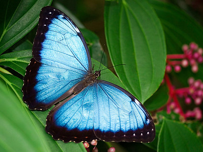 Jerry Koons - Blue Beauty