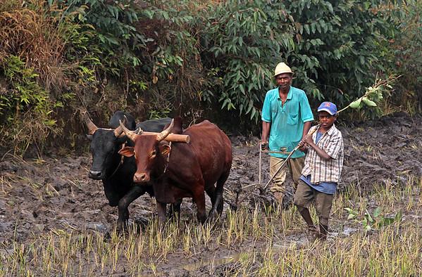 44-Ploughing the Field-JK