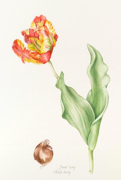 Parrot tulip<br>© Juliet Kirby
