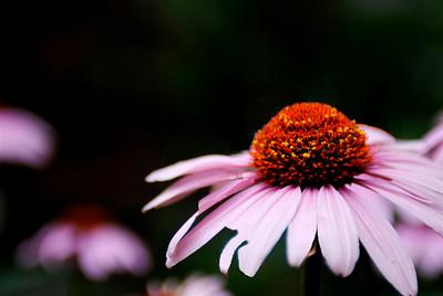 Kevin Sheehan - Flower Power
