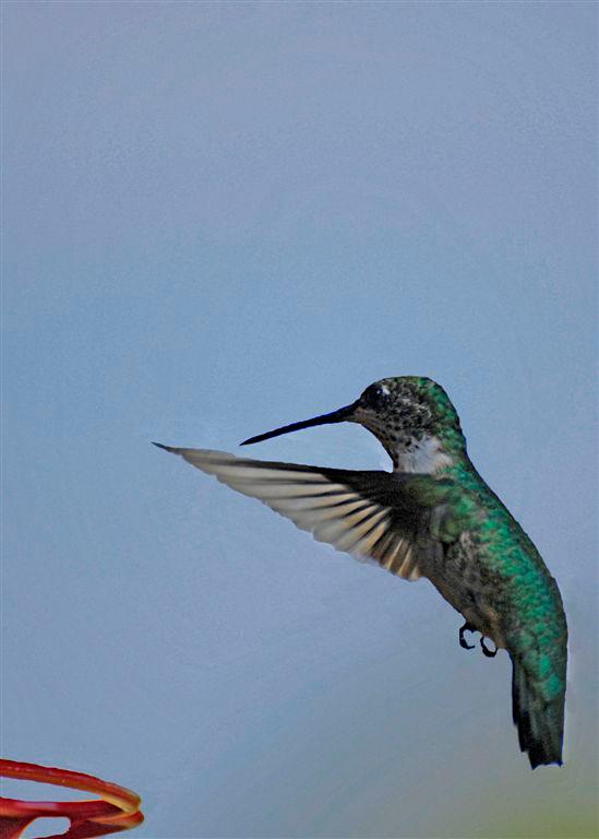 Kevin Sheehan - Hummingbird Landing