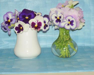 Marilyn, Mattatut -  Vased, Pansies