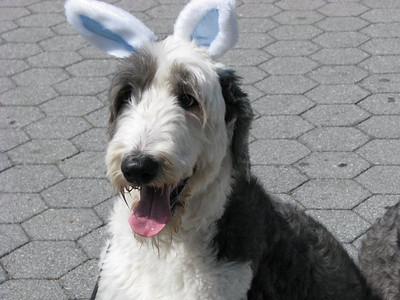Marilyn Mattutat - Easter Dog