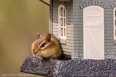 chipmunk-feeder