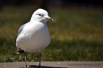 gull-expression-copy