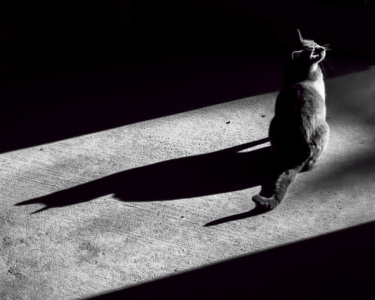 Oliver's Shadow