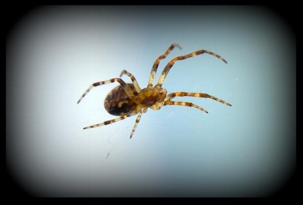 Creepy Crawler (1280x866)