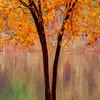 Lake Johnson Tree