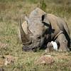Rhino and Friend