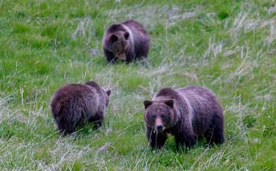3 Bears-5731