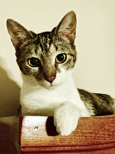 Sassycat 2 6 17