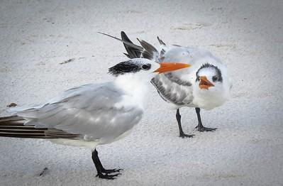 marygeorgeson_birdsquawk