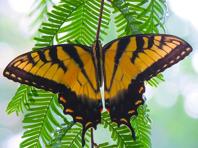 Mary Georgeson_monarch butterfly.jpg