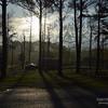 Luz en el bosque – Version 2