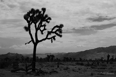 DSC_4919-Joshua Tree copy-Full