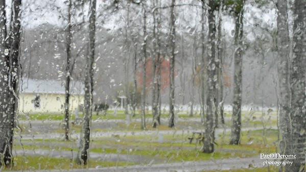 Bosque lluvioso – Version 3