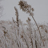 Winter Weeds 6333