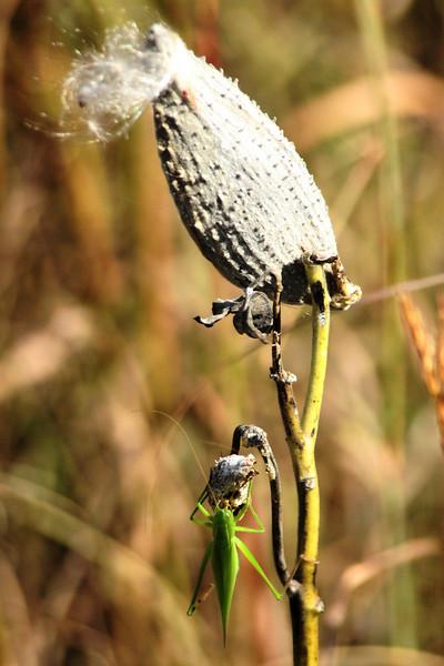 Green Bug 145