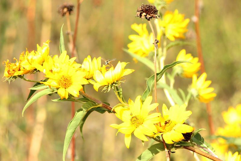 Flower Flier 283