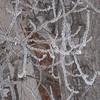 Frost Art 6341
