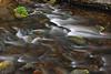 Candle Creek