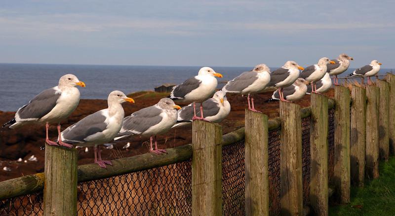 Coastal Chorus Line - Jack Walker