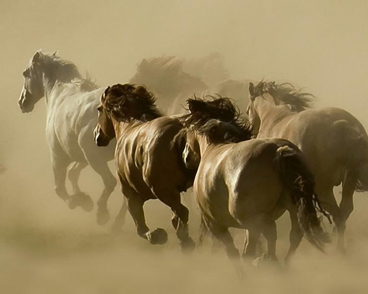 Horse Spirits, c Kate Thomas Keown 2009