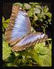 SAPC_OutingPrvw_BlueGlow_LindaZ_779